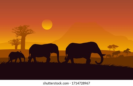Silhouette African elephant walking landscape with safari, trees and family of elephants under orange sky with rising sun.Background vector.