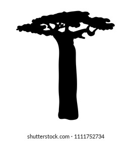 Silhouette baobab icon tree flora