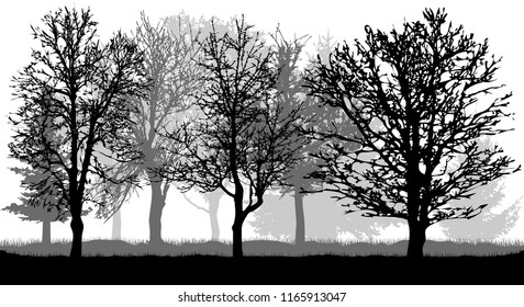 Silhouette of bare trees. Autumn park (forest), vector