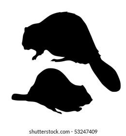 silhouette of beaver