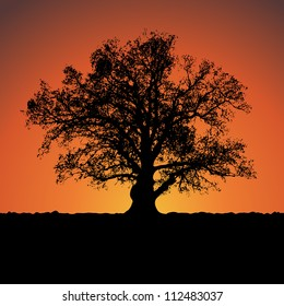 Silhouette of a big mighty oak against sunset. Vector. eps 8