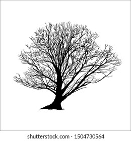 silhouette big tree. vector logo design. isolated natural plant sign