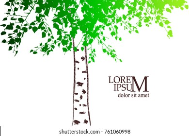 Silhouette of a birch tree. Vector