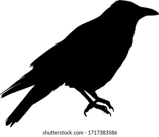 Silhouette of a bird crow on a white background