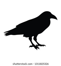 Silhouette of bird isolated on white background vector, corbie, a raven, crow, or rook - Vector