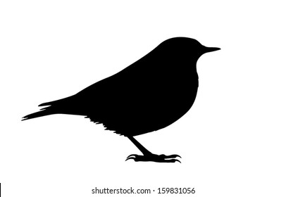 Silhouette of the bird (Wheatear) standing.