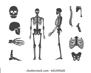 Silhouette Black Human Skeleton and Part Set Anatomy Bone Isolated on White Background . Vector illustration
