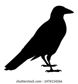 Silhouette of a black raven. Vector black white illustration