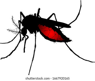 Silhouette of a bloated female mosquito, scientifically known as Diptera Culicidae. Vector illustration.