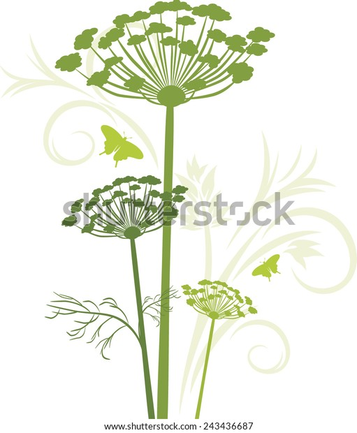 silhouette-blooming-fennel-isolated-on-6
