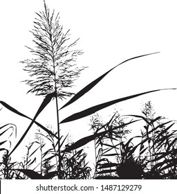 Silhouette of blooming grass cattail. Grass by the lake. Group of plants. Close-up. Isolated vector illustration. Black on white.