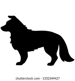 Silhouette of Border Collie dog Idle pose