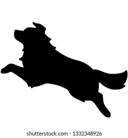 Silhouette of Border Collie Jumping