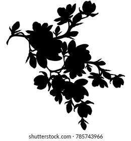 silhouette branch magnolia flower blossom  vector illustration