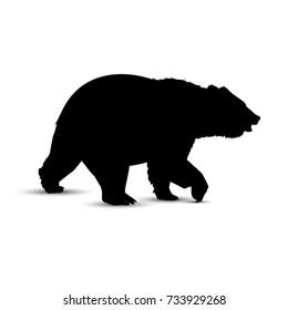 Silhouette of brown  bear.