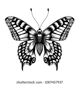 Silhouette of butterfly. Tattoo butterfly. Isolated vector sketch of butterfly.