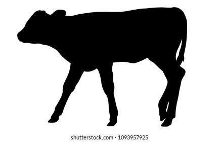 silhouette of a calf
