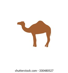Silhouette camel.