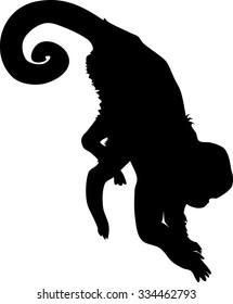 silhouette of Capucin Monkey