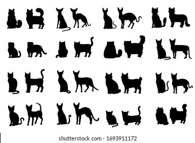Silhouette cat face and profile. Vector set breeds contour isolated illustration.