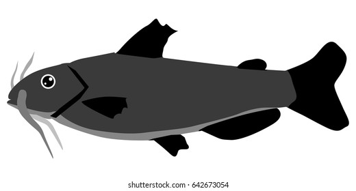 silhouette of catfish