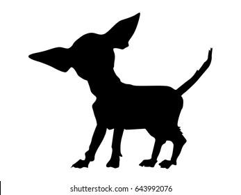 silhouette of chihuahua