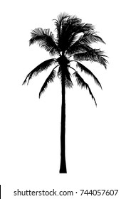 silhouette of coconut tree, natural palm illustration, vector summer sign