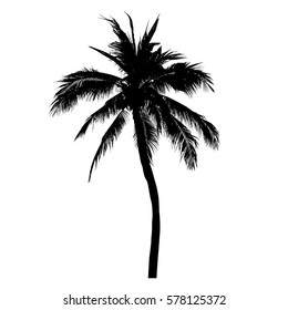 silhouette of coconut tree, palm tree illustration, vector summer sign