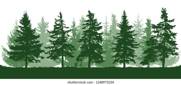 Silhouette of coniferous forest, beautiful fir trees. Isolated on white background. Vector illustration.