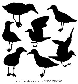 Silhouette of cormorants collection. Seagull with his head turned to the right. Vector isolated illustration Black color. Logo with the image of a seagull.