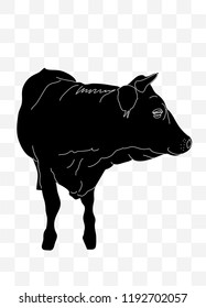 Silhouette of a cow in black and white looking to the left on a transparent background. Red, Irish angus.