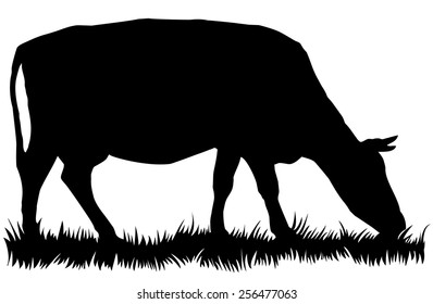 Silhouette of cow eating grass - vector illustration