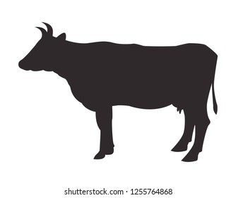 Silhouette cow on white background. Vector icon.