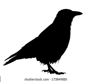 Crow Silhouette Images Stock Photos Vectors Shutterstock Choose from over a million free vectors, clipart graphics, vector art images, design templates, and illustrations created by artists worldwide! https www shutterstock com image vector silhouette crow standing 173849885