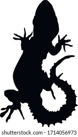 Silhouette of a curved lizard. Reptiles of Israel. Lizard tattoo.Isolated vector illustration.