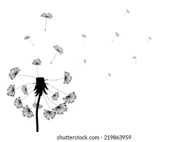 Silhouette dandelion with seeds on white background. Vector EPS10.