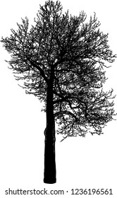 Silhouette of deciduous tree in winter