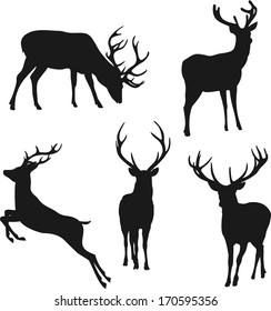 silhouette deer on white background