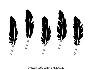 Silhouette of different feathers