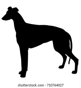 silhouette of a dog. black and white greyhound.Vector illustration