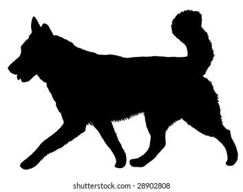 Silhouette of a dog of breed Alaskan Malamute