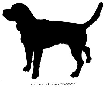 Silhouette of a dog of breed beagle