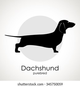 The silhouette of the dog breed Dachshund