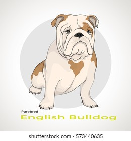 The silhouette of the dog breed English Bulldog