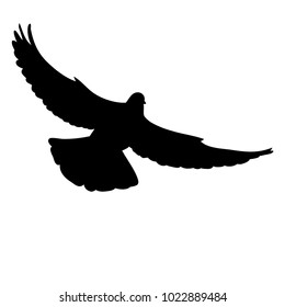 silhouette dove flying