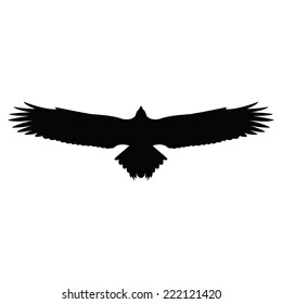 picture regarding Printable Hawk Silhouette for Window titled Hawk Silhouette Shots, Inventory Images Vectors Shutterstock