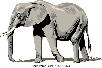 silhouette of an elephant vector - elephant in full growth, moving forward, sketch graphics vector black and white drawing - Cartoon elephant isolated on white