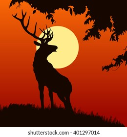 silhouette of elk in the natural environment. elk on the sunset background. isolated elk on the hill