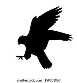Silhouette of the Falcon attack.