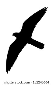 Silhouette of the Falcon (bird). Can be used as Falcon (raptor) Silhouette Window Sticker to prevent birds from flying and killing themselves to the building windows.